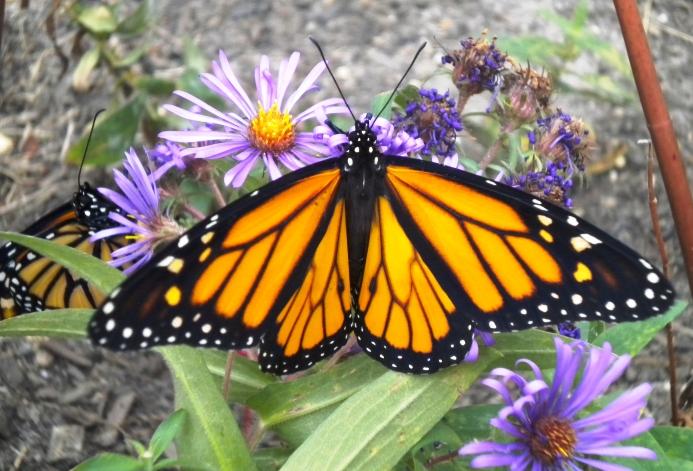 monarchs school oct. 09